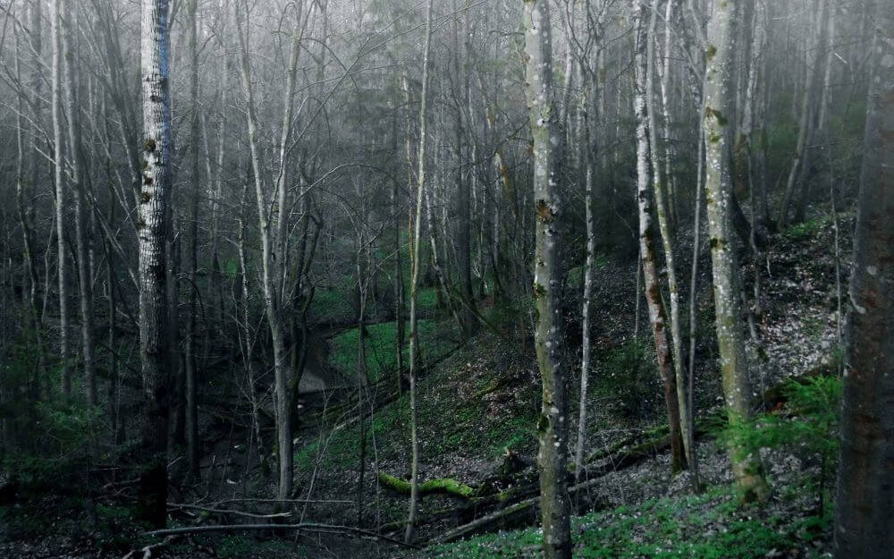 forests-forests8